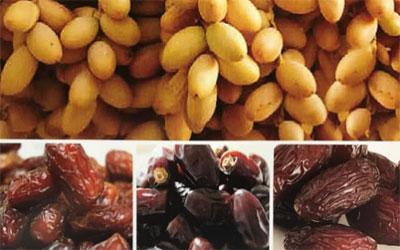 Al Maqtaa Dates Factory - 1.jpg